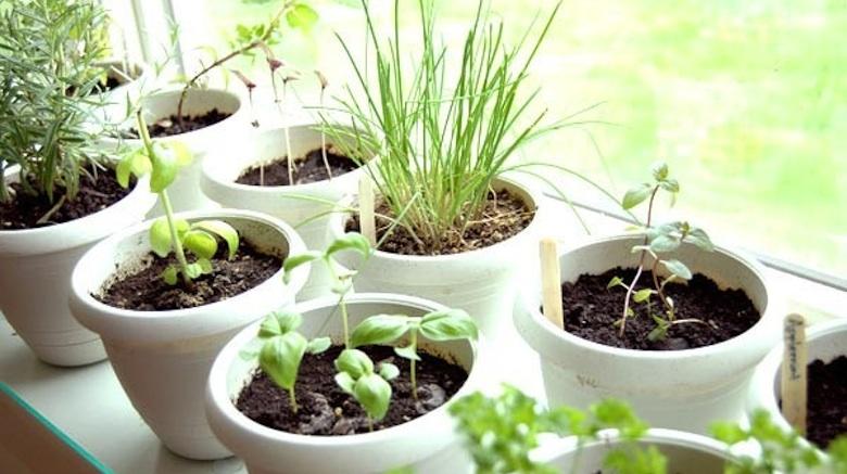 Gezonder eten en leven – 4 snelle tips met impact